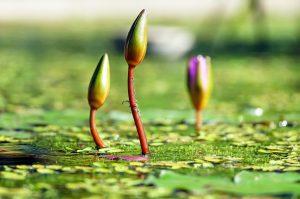 Pool Pflege Algenbekaempfung